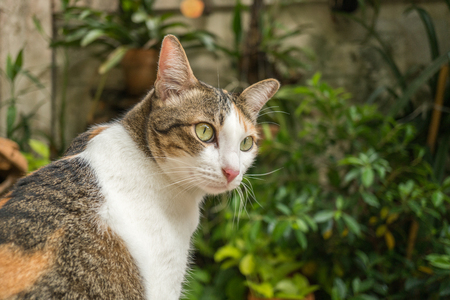 Beautiful cat in the garden in front of the house. Reklamní fotografie - 124644587