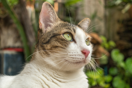 Beautiful cat in the garden in front of the house. Reklamní fotografie - 124644588
