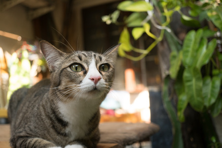 Beautiful cat in the garden in front of the house. Reklamní fotografie - 124644596