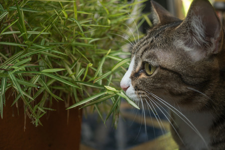 Beautiful cat in the garden in front of the house. Reklamní fotografie - 124644597