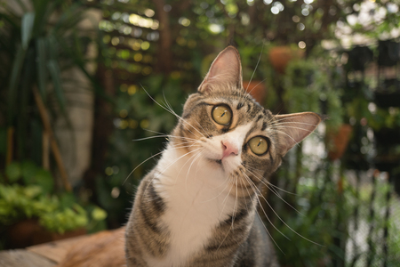 Beautiful cat in the garden in front of the house. Reklamní fotografie - 124644604