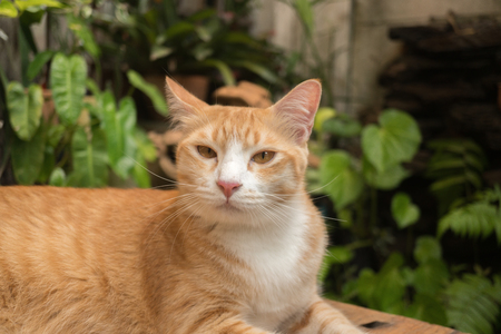 Beautiful cat in the garden in front of the house. Reklamní fotografie - 124644605
