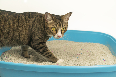 The excretion of a cat at the sandbox in the morning. Reklamní fotografie - 124644633