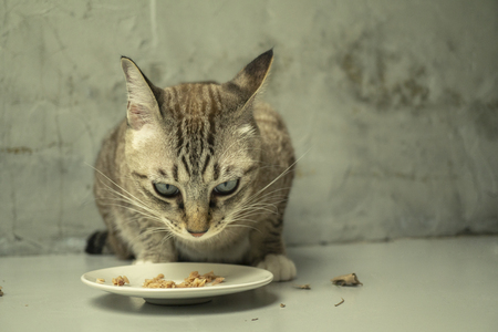 Fat cats look cute when eating. Banco de Imagens