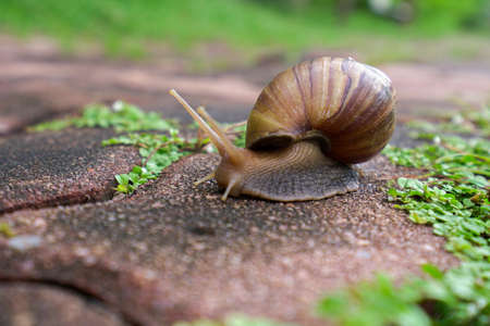 Snails tend to come out when the rain has passed.