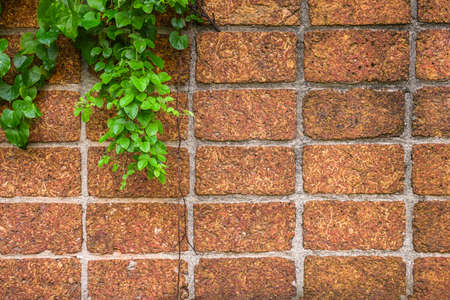 Red brick wall with beautiful ivy. Reklamní fotografie