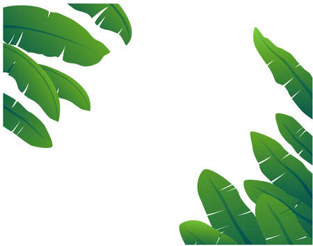 Banana leaves are beautifully arranged and arrange Ilustrace