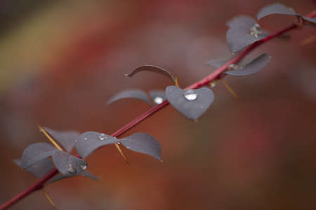 environmen: isolated plant with some drops of water in autumn environmen