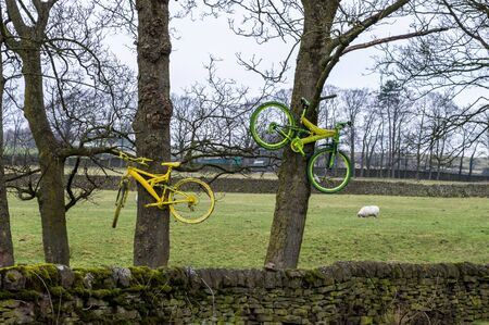 Bicycles in trees