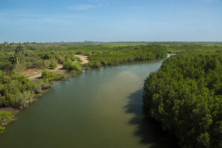 A tributary of the River Gambia in Gambia, Africa