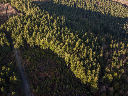 An aerial view of the trees at Haldon forest in Devon, United Kingdom