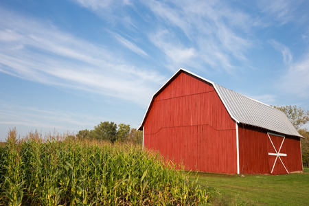 corn crop: Red barn standing near late-summer corn with a dramatic blue sky in the upper frame.  White accents on barn.  Copy space in sky if needed. Stock Photo