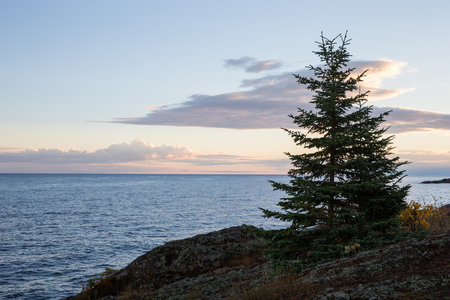 superiors: Lone pine tree along Lake Superiors rocky shore line seen in near-silhouette and early dawn light.  Pastel colors with copy space in the sky and water.