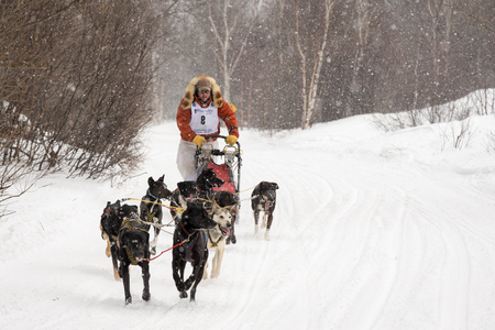 mushing: Calumet, MI - March 1, 2015:  CopperDog 150 sled dog race.  Teams traverse 150 miles over 3 days during the annual event, which starts and ends in historic Calumet, Michigan.  Musher shown is JR Anderson. Editorial