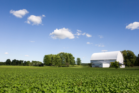 Green crops in foreground leading to a white barn and blue sky with some clouds and copy space if needed.