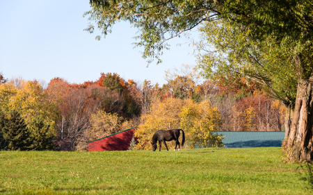 Horse grazing under large shade trees in a pasture in the autumn.  Fall colors with some copy space in the sky. Stock Photo