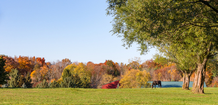 Idyllic pasture scene in the autumn.  Horse grazing under large shade trees in Fall colors with copy space in the sky. Stock Photo
