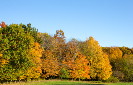 Trees in brilliant Fall colors with copy space in the sky. Stock Photo