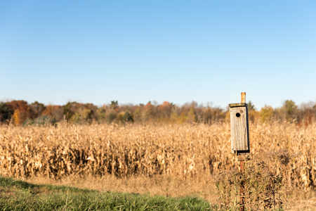 Wooden bird house on a rusty metal pole with dry corn stalks and trees in the background.  Selective focus on the bird house.  Copy space in sky.
