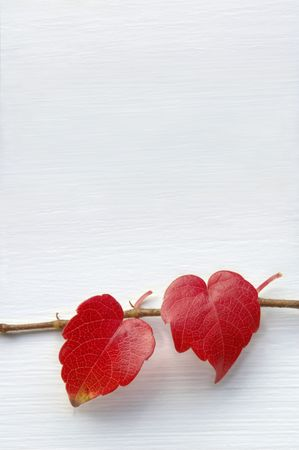 two object: Natural hearts Stock Photo