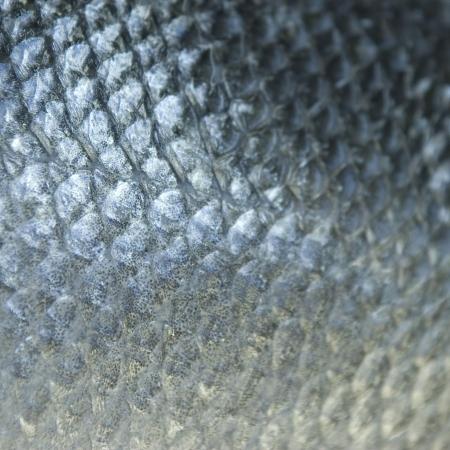 escamas de peces: Escamas de pescado