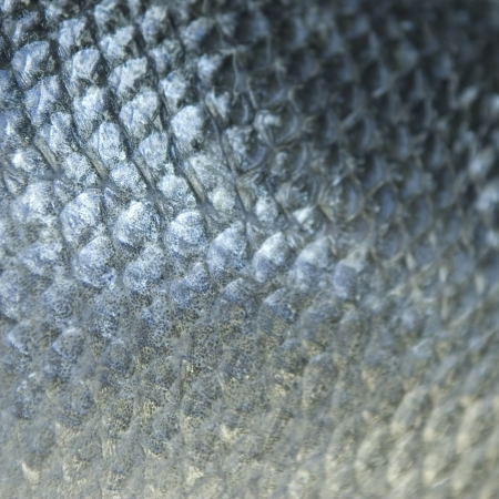 animal scale: Fish scales
