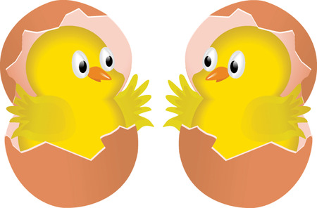 CHICKS IN EGGS Vector
