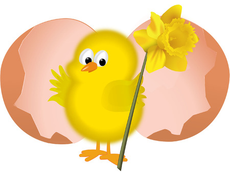 easter chick with daffodil Vector