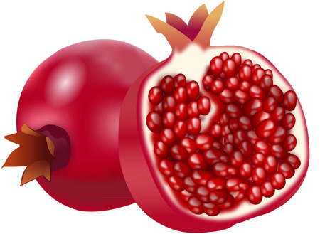 b1: pomegranate Illustration