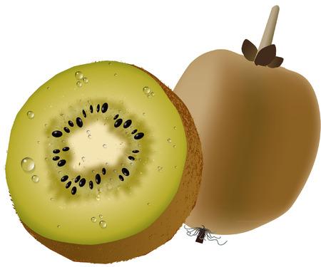 kiwi fruit: fruta de kiwi Vectores