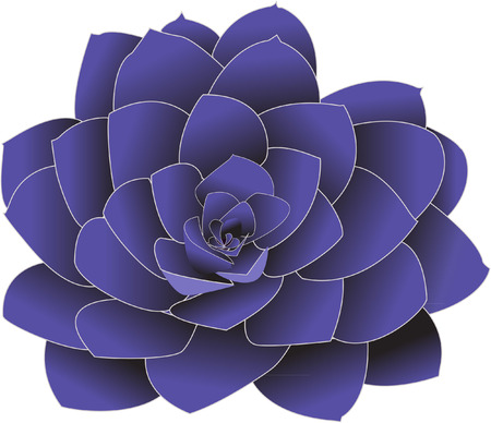 osteospermum: flower