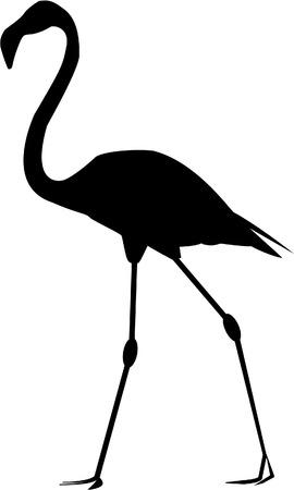 flamenco ave: silueta del flamenco