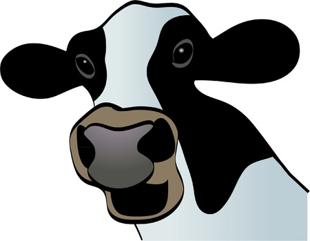 COW CLOSE UP Vector