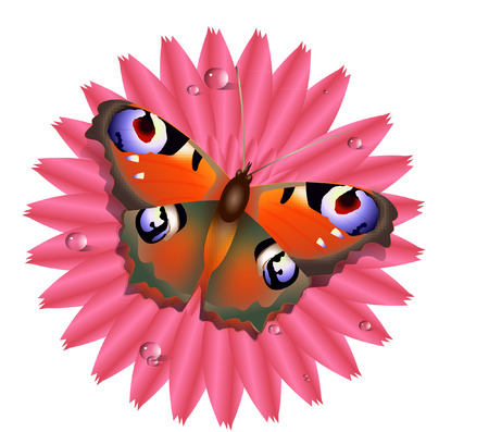 spreaded: butterfly on flower