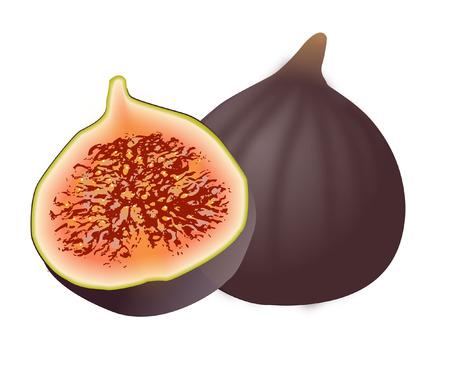 fig fruit: FIG