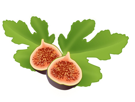 FIG AND LEAF Vector