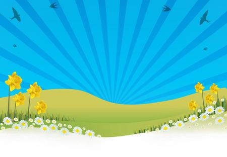 camomiles macro: summer
