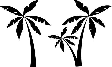 palm tree leaves: PALM