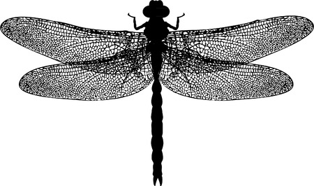 dragonfly wing: DRAGONFLY Illustration