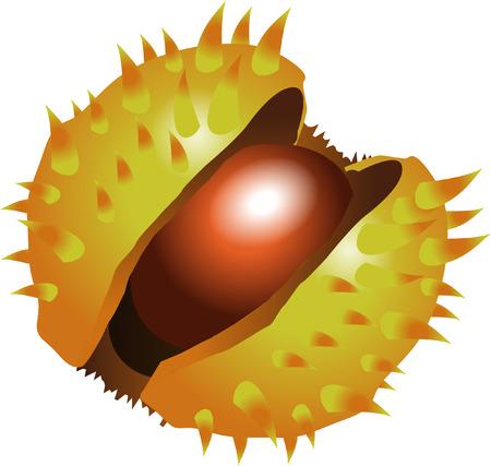 conker: CONKER Illustration