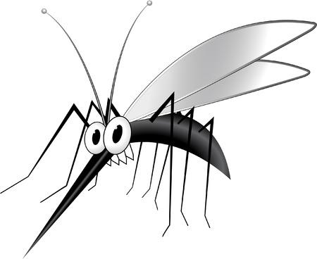 dipterus: mosquito Illustration