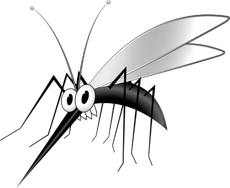 the bloodsucker: mosquito Illustration