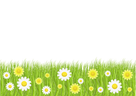grass blades: grass and daisies