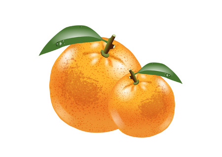 royalty free stock photos: oranges