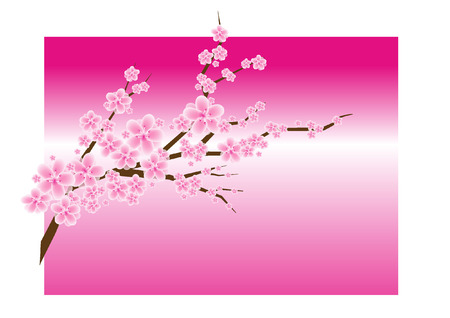 eps picture: Cherry blossom in spring time