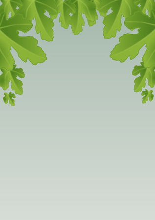 stock photograph: Fig leaves Illustration