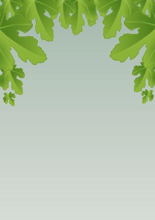modesty: Fig leaves Illustration