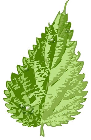 green leaf Vektorgrafik