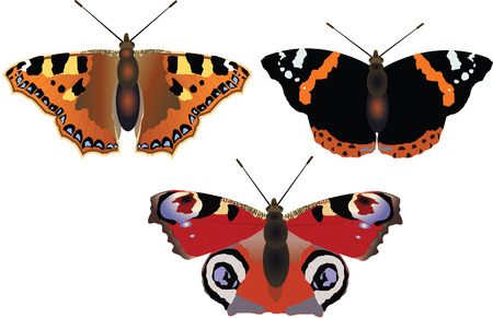 butterflys: Butterflys Illustration