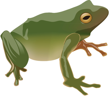 froggy: Green Frog